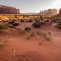 Small blossoms in Monument Valley.- Monument Valley Navajo Tribal Park