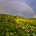 A perfect rainbow forms over the wildflowers on the plateau at Tom McCall Point.- Tom McCall Point Hike