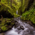 Mossy Grotto Falls surrounded by moss and ferns.- Ruckel Ridge Loop Hike