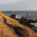 Trails run parallel to the shoreline near Gerstle Cove.- How to Microadventure Like a Badass