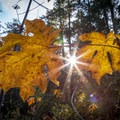 Eagle Creek fall colors in Mark O. Hatfield Wilderness.- Wander Among Wilderness Areas