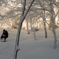 Late afternoon light glows in the snow-covered trees of Little Jay.- Vermont's 10 Best Winter Adventures