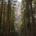 Old-growth ponderosa pines frame Upper and Lower Yosemite Falls.- Winter in Yosemite National Park