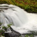 Sweet Creek.- Best Hikes on the Central Oregon Coast