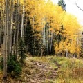 The Marvine Lake Trail is singletrack for much of the way.- When and Where Fall Foliage Will Peak This Autumn