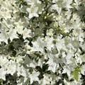 Blooming flowers at Volunteer Park.- City Parks You Definitely Need to Visit