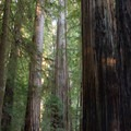 Stout Memorial Grove. Jedidiah Smith Redwoods State Park.- Outdoor Project Staff Picks: 10 Favorite Hikes in California