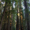 Stout Memorial Grove. Jedediah Smith Redwoods State Park. - Exploring California's 9 National Parks