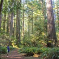 Leiffer and Ellsworth Loop Trails. Jedediah Smith Redwoods State Park.- Redwood National + State Parks