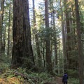Leiffer Loop Trail. Jedediah Smith Redwoods State Park.- 3-Day Itinerary for Redwood National + State Parks