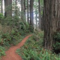Damnation Creek Trail.- Hiking in California's Redwoods