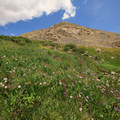 Wildflowers on the upper trail.- Blue Lakes Trail