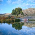 Panaca Warm Spring swimming hole.- Nevada's Best Adventures Off the Beaten Path