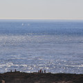 Whales are a common sight in the nutrient-rich waters off Point Lobos.- Best Hikes on the Northern California Coast