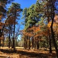 Forested area surrounds Woods Canyon Lake.- 15 Perfect Day Hikes to Find Fall Foliage