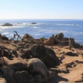 The Cypress Grove Trail in Point Lobos State Natural Reserve.- California's 60 Best Day Hikes
