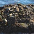 Harbor seals enjoying the afternoon sun along the South Shore Trail in Point Lobos State Natural Reserve.- Driving 101: An Unbeatable West Coast Road Trip