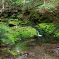 This lush woodland setting is found along the Dickson Falls Trail.- Dickson Falls Trail