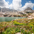Wildflowers cover the ground along streams in the Blue Lake area.- 15 Family-Friendly Hikes Near Boulder, Colorado