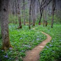 White Oak Sinks in the Smokies is one of the top spots for spring wildflower viewing.- 12 Months of Adventure: March - Photography