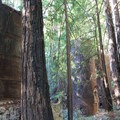 The hidden limekilns of Limekiln State Park.- The Best of Big Sur: Hiking, Camping, Beaches, and Waterfalls