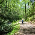 Following a small stream, you'll find tranquility and wildflowers all along the Schoolhouse Gap Trail.- 10 Incredible Wildflower Hikes in Great Smoky Mountains National Park