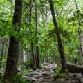 Rainbow Falls Trail.- Rainbow Falls Trail via LeConte Creek