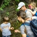 Explore the Little River Trail with the family. The Great Smoky Mountains National Park is the salamander capital of the world. Take time to meet the locals! - 10 Incredible Wildflower Hikes in Great Smoky Mountains National Park
