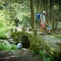 Exploring the Elkmont Troll Bridge in Great Smoky Mountains National Park.- 8 Favorite Forests for Family Adventures