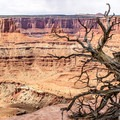Utah juniper trees make great foreground accents.- The Colorado River Ecosystem: Conflict and Conservation