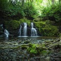 Indian Flats Falls tucked away at mile 4 of the Middle Prong Trail. Watch your step! The falls are home to many local salamanders. - American Rainforests You Need to See