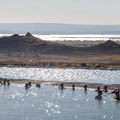 Lake Mývatn to the west.- Guide to Iceland's Ring Road