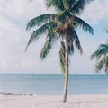 Palm trees at Smathers Beach.- The Ultimate Florida Road Trip Part II: Central + South Florida