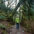 Twin Falls Hike.- The Stately Serenity of Old-growth Forests