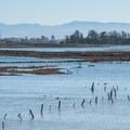 Elkhorn Slough National Estuarine Research Reserve.- Western Birding Hotspots