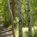 Aspens at Silver Lake along the June Lake Loop.- The Best Leaf-Peeping Adventures for Fall Foliage