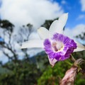 Many wild orchids and other rare native plants can be seen on the Pu'u Ohia Trail.- Hawaii's Best Day Hikes