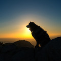 Canine companion at Cucamonga Peak.- Finding the Perfect Sunrise and Sunset Spots
