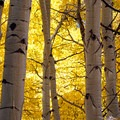 Fall Aspen color on Kebler Pass. - 8 Unique Fall Camping Trips