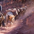 Mules carry supplies and riders to the accommodations at Phantom Ranch daily.- Grand Canyon Lodging: 15 Best Accommodations In and Out of the National Park