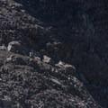 Mountain goats! - Canyon Creek Meadows