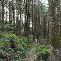 Heceta Head Trail.- Best Hikes on the Central Oregon Coast