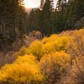 Fall color along Vivian Creek at San Gorgonio.- 12 Great Summit Hikes Near Los Angeles
