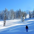 The trail to Brown Mountain.- 10 Amazing Snowshoe Trails in Oregon