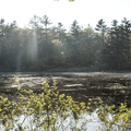 A small section of the lake from the Yellow Trail in Mansfield Hollow State Park.- 15 Must-Visit New England State Parks