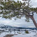 The Matrimony Tree on the ridge.- 22 Must-do Snowshoe Trails in the West