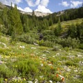 More late summer wildflowers in Eureka Gulch.- Groves, riots, and Sundry Summer Flora Assemblies