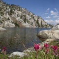 Scarlet paintbrush (Castilleja miniata) at Everly Lake.- Incredible Hikes for Alpine Wildflowers