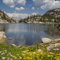 Flowers on the shore of Everly Lake with Elk Peak in the background.- Idaho's Best Backpacking Trips