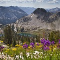 Wildflower meadows of the Queens River Divide.- Idaho's Best Backpacking Trips